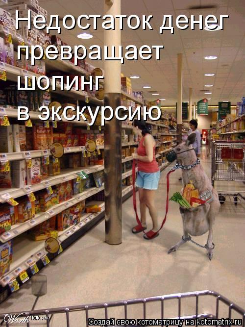 Котоматрица: Недостаток денег  превращает  шопинг в экскурсию