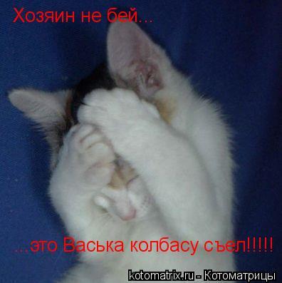 Котоматрица: Хозяин не бей... ...это Васька колбасу съел!!!!!