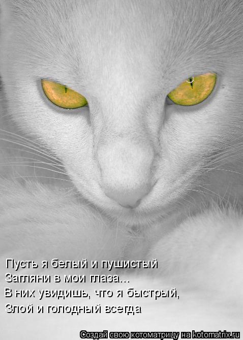 Котоматрица: Пусть я белый и пушистый Загляни в мои глаза... В них увидишь, что я быстрый, Злой и голодный всегда