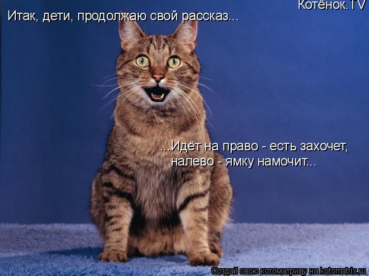 Котоматрица: Итак, дети, продолжаю свой рассказ... ...Идёт на право - есть захочет, налево - ямку намочит... Котёнок.TV