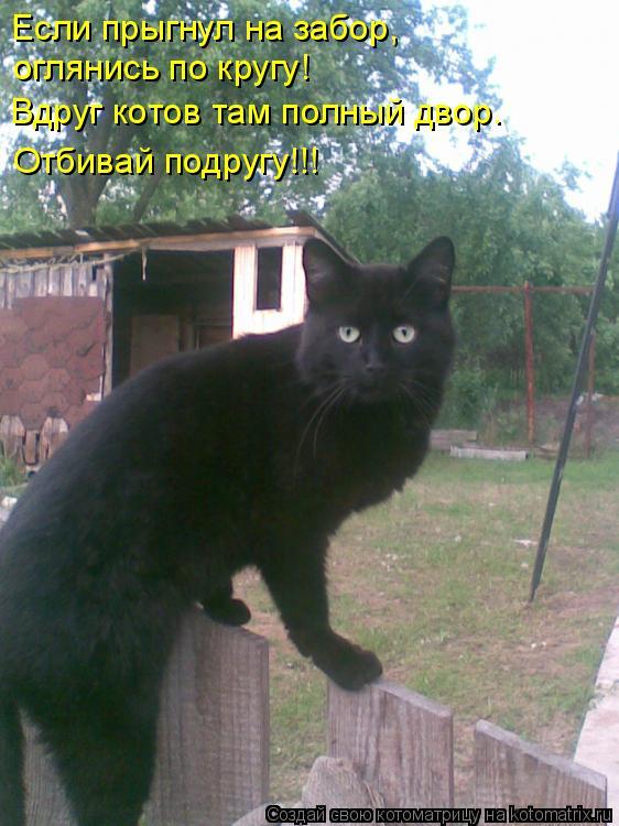 Котоматрица: Если прыгнул на забор, оглянись по кругу! Вдруг котов там полный двор. Отбивай подругу!!!