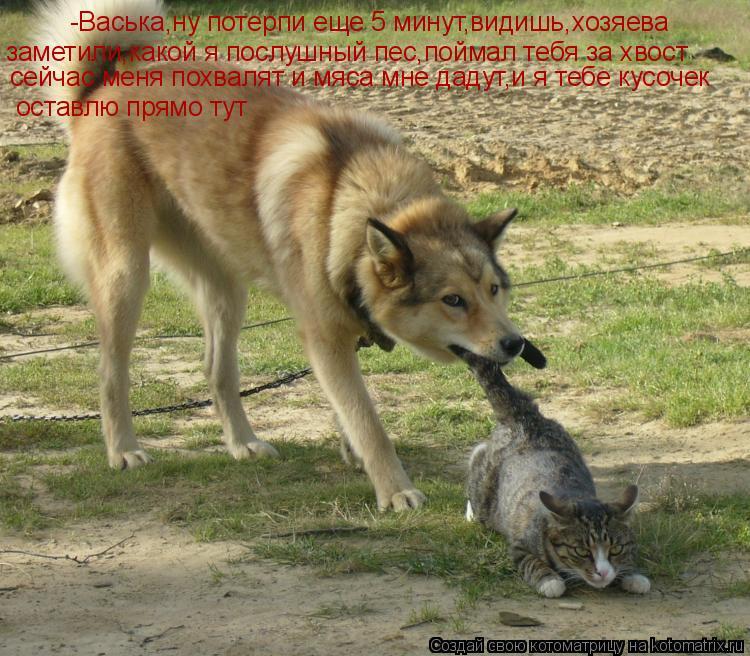 Котоматрица: -Васька,ну потерпи еще 5 минут,видишь,хозяева заметили,какой я послушный пес,поймал тебя за хвост сейчас меня похвалят и мяса мне дадут,и я т
