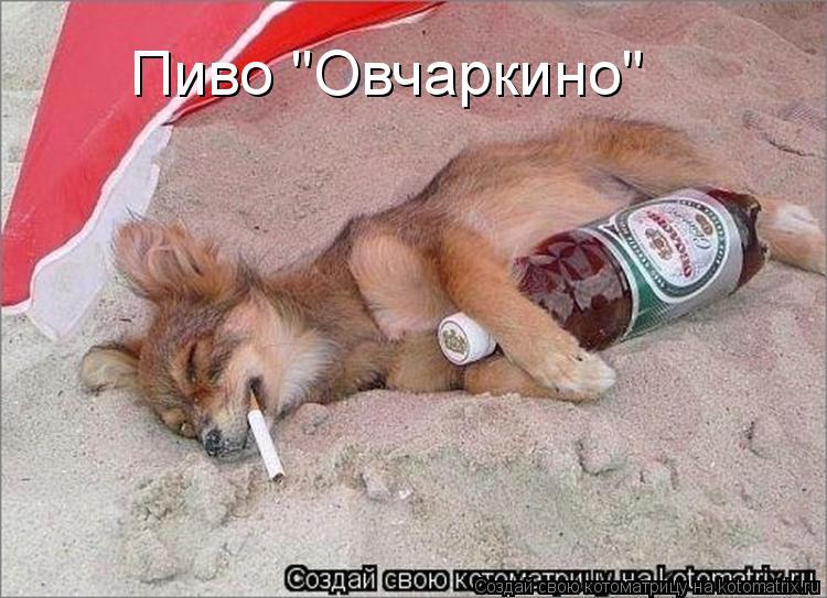 "Котоматрица: Пиво ""Овчаркино"""