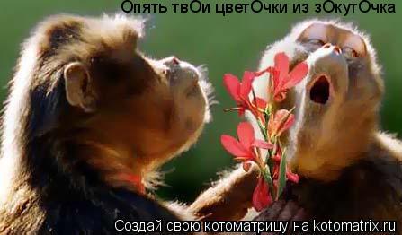 Котоматрица: Опять твОи цветОчки из зОкутОчка
