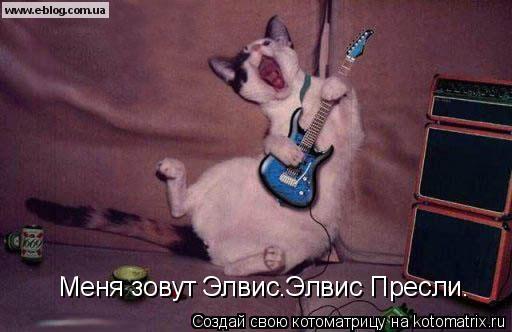 Котоматрица: Меня зовут Элвис.Элвис Пресли.