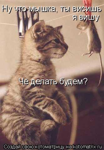 Котоматрица: Ну что мышка, ты висишь  я вишу Чё делать будем?