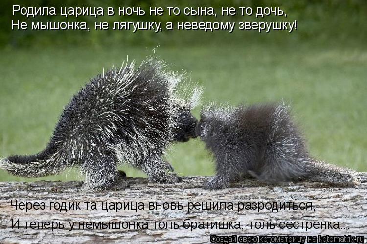 Котоматрица: Родила царица в ночь не то сына, не то дочь, Не мышонка, не лягушку, а неведому зверушку! Через годик та царица вновь решила разродиться, И теп