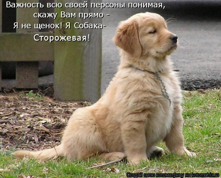 Котоматрица: Важность всю своей персоны понимая, скажу Вам прямо -  Я не щенок! Я Собака- Сторожевая!