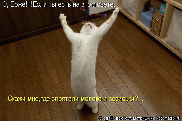 Котоматрица: О, Боже!!!!Если ты есть на этом свете... Скажи мне,где спрятали молоко и сосиськи?...