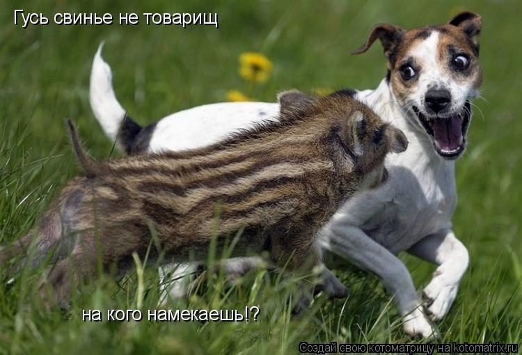 Котоматрица: Гусь свинье не товарищ на кого намекаешь!?