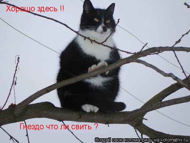 Котоматрица: Хорошо здесь !! Гнездо что ли свить ?
