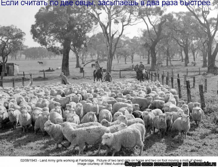 Котоматрица: Если считать по две овцы, засыпаешь в два раза быстрее.