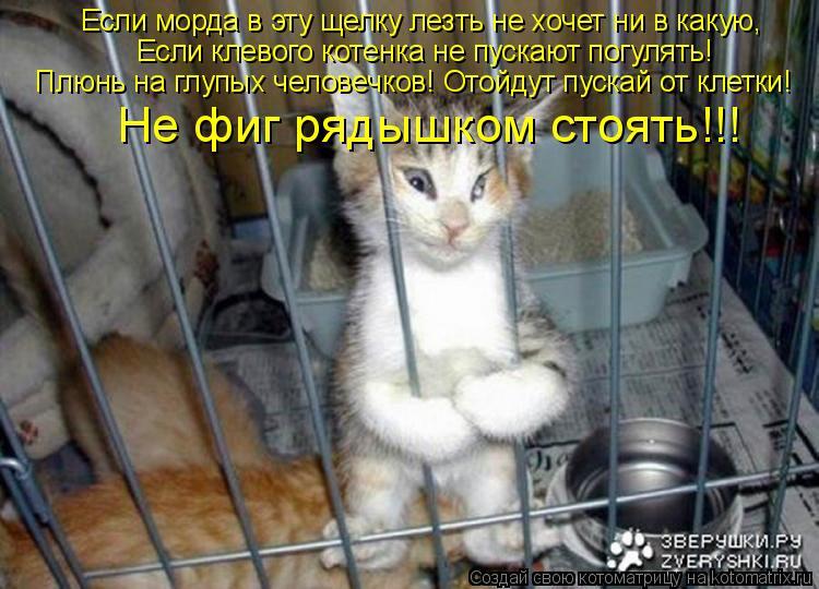 Котоматрица: Если морда в эту щелку лезть не хочет ни в какую,    Если клевого котенка не пускают погулять!         Плюнь на глупых человечков! Отойдут пускай