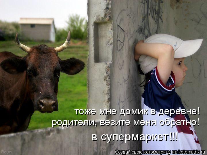 Котоматрица: тоже мне домик в деревне! родители, везите меня обратно! в супермаркет!!!