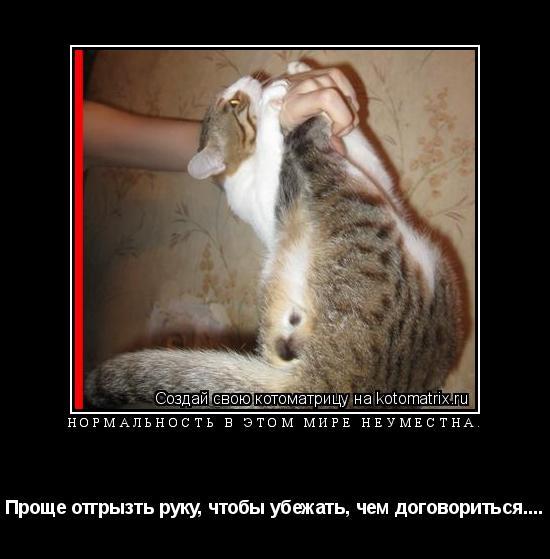 Котоматрица: Нормальность в этом мире неуместна. Проще отгрызть руку, чтобы убежать, чем договориться....
