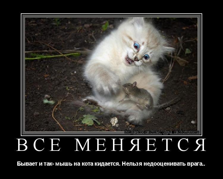 Котоматрица: Всё меняется Бывает и так- мышь на кота кидается. Нельзя недооценивать врага..