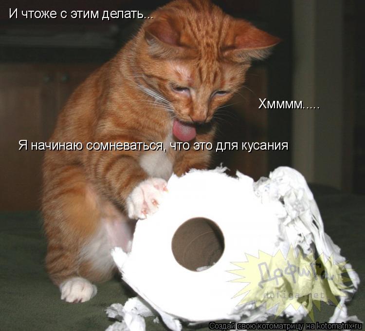 Котоматрица: И чтоже с этим делать... Хмммм..... Я начинаю сомневаться, что это для кусания