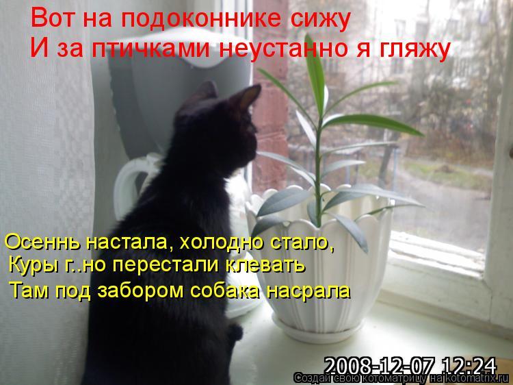 Котоматрица: Вот на подоконнике сижу И за птичками неустанно я гляжу Осеннь настала, холодно стало, Куры г..но перестали клевать Там под забором собака н