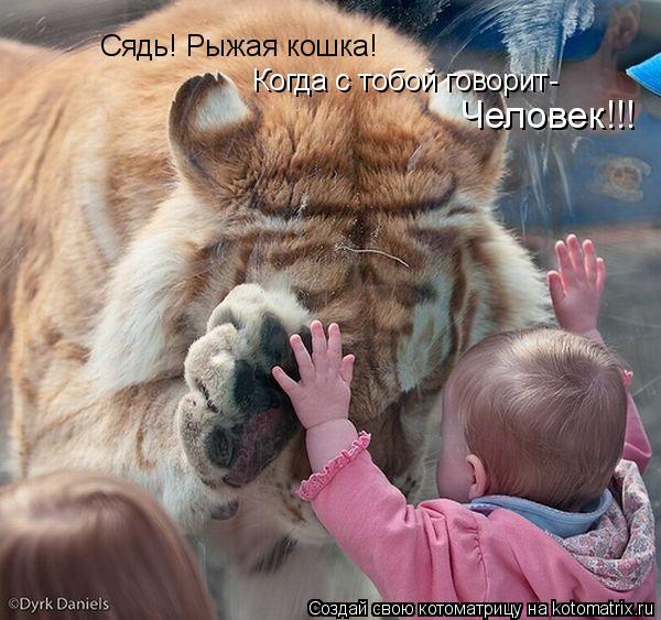 Котоматрица: Сядь! Рыжая кошка! Когда с тобой говорит- Человек!!!