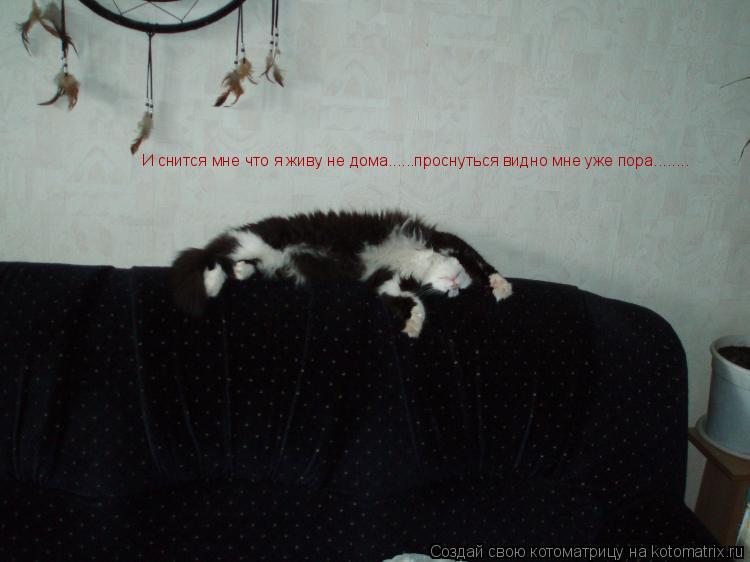 Котоматрица: И снится мне что я живу не дома......проснуться видно мне уже пора........