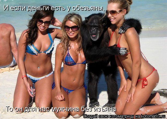 Котоматрица: И если деньги есть у обезьяны,  То он для нас мужчина без изъяна