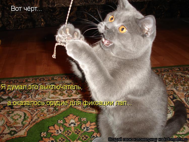 Котоматрица: Вот чёрт... Я думал,это выключатель, а оказалось орудие для фиксации лап...