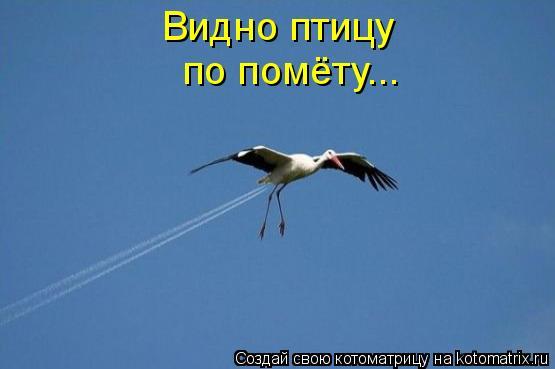 Котоматрица: Видно птицу по помёту...