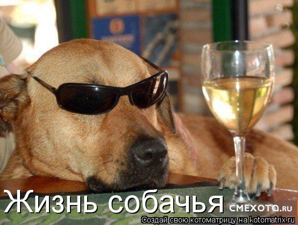 Котоматрица: Жизнь собачья