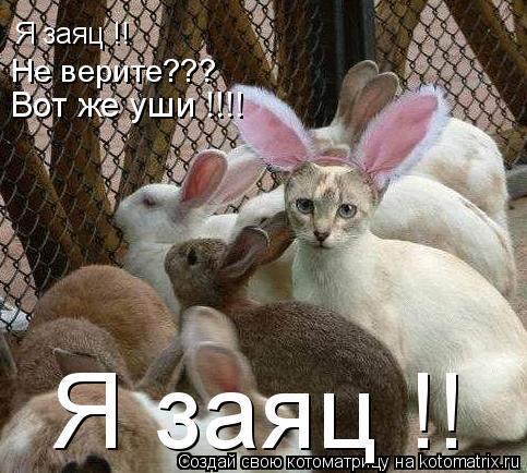 Котоматрица: Я заяц !! Не верите??? Вот же уши !!!! Я заяц !!