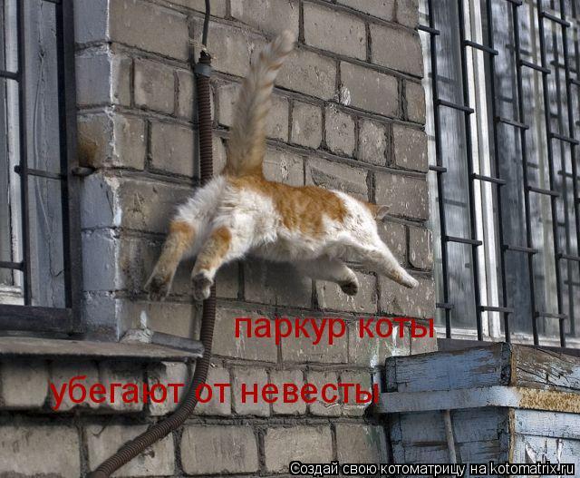 Котоматрица: паркур коты паркур коты убегают от невесты