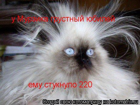Котоматрица: у Мурзика грустный юбилей ему стукнуло 220