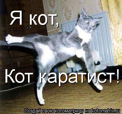 Котоматрица: Я кот, Кот каратист!