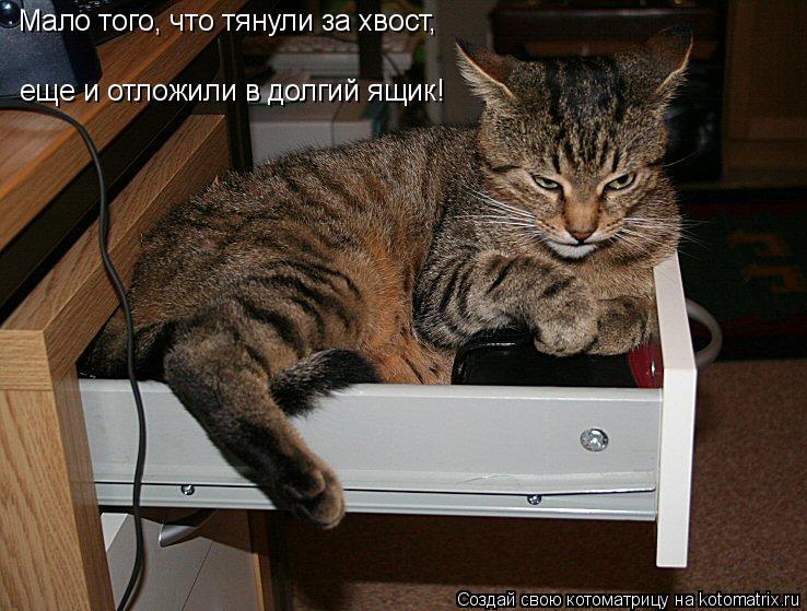 Котоматрица: Мало того, что тянули за хвост, еще и отложили в долгий ящик!