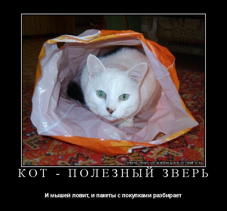 Котоматрица: Кот - полезный зверь И мышей ловит, и пакеты с покупками разбирает