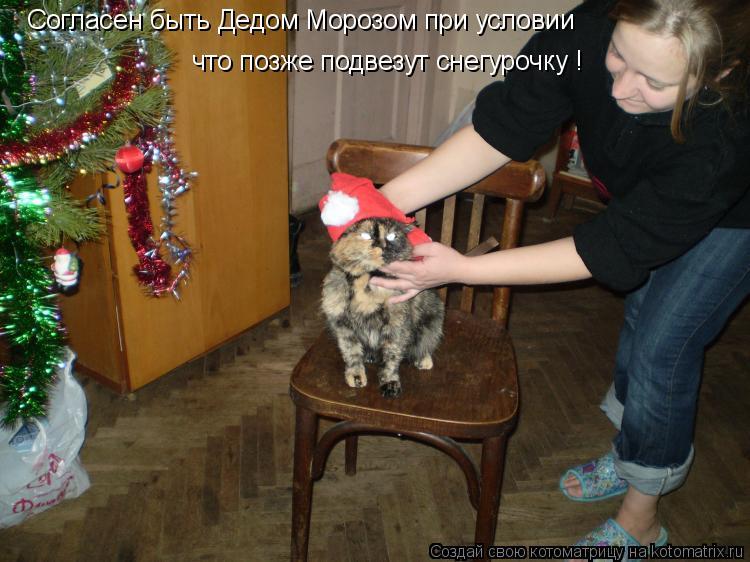 Котоматрица: Согласен быть Дедом Морозом при условии что позже подвезут снегурочку !