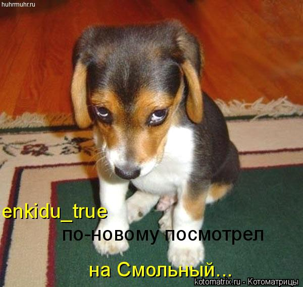 Котоматрица: enkidu_true по-новому посмотрел на Смольный...
