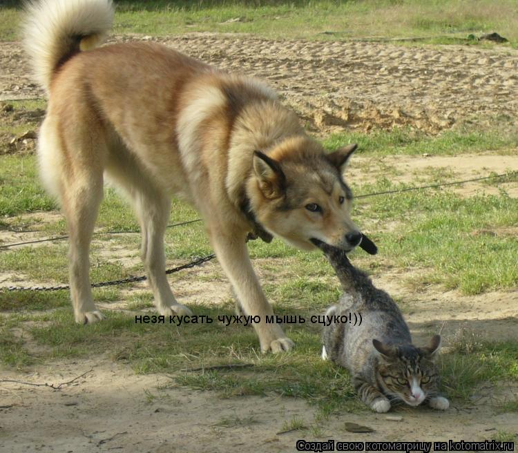 Котоматрица: незя кусать чужую мышь сцуко!))