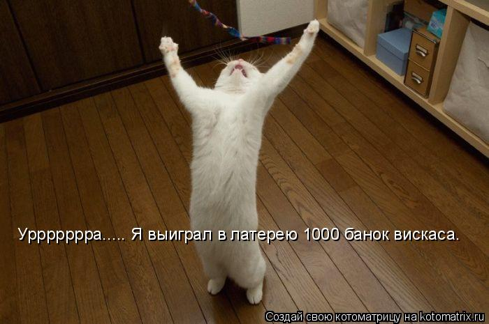 Котоматрица: Уррррррра..... Я выиграл в латерею 1000 банок вискаса.
