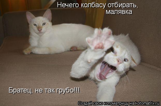 Котоматрица: Братец, не так грубо!!! Нечего колбасу отбирать, малявка