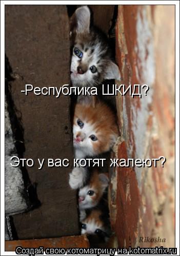 Котоматрица: -Республика ШКИД? Это у вас котят жалеют?