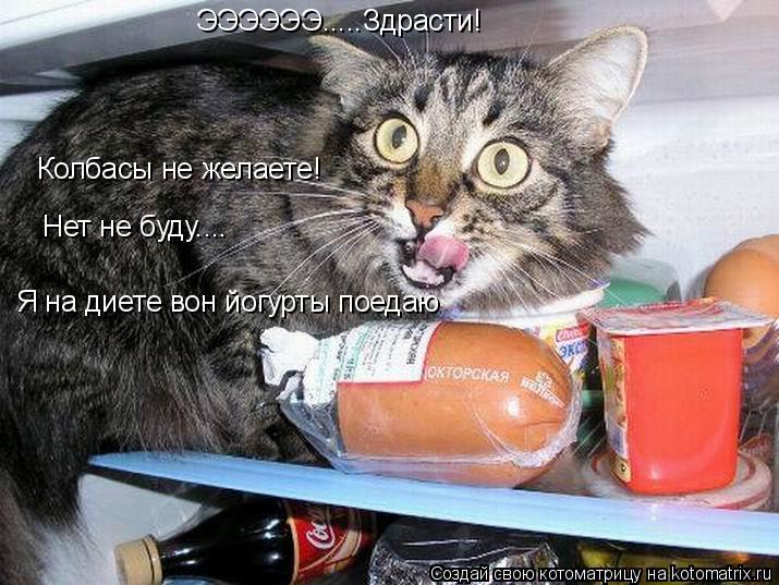 Котоматрица: ЭЭЭЭЭЭ.....Здрасти! Колбасы не желаете! Нет не буду.... Я на диете вон йогурты поедаю