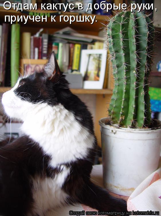 Котоматрица: Отдам кактус в добрые руки,  приучен к горшку.