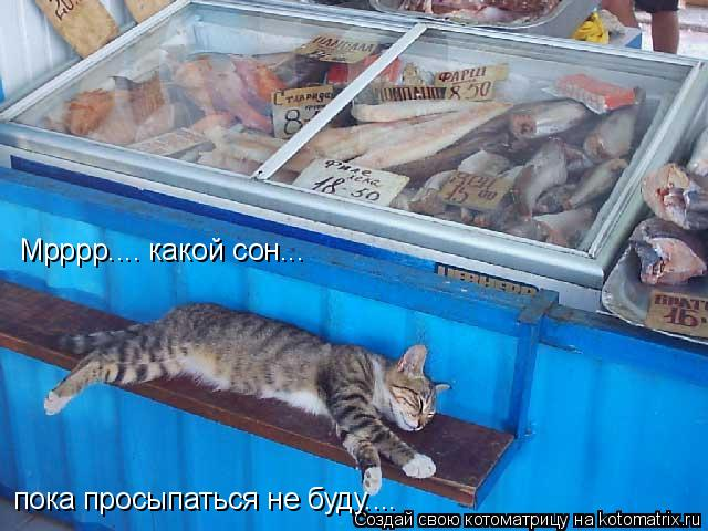 Котоматрица: пока просыпаться не буду.... Мрррр.... какой сон...