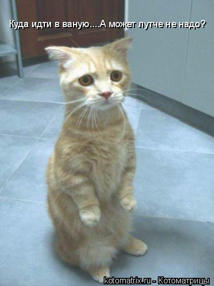 Котоматрица: Куда идти в ваную....А может лутче не надо?