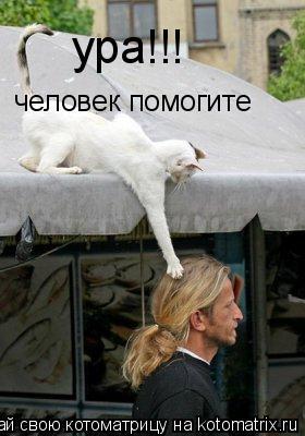 Котоматрица: ура!!!  человек помогите