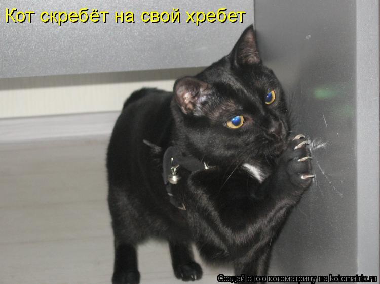 Котоматрица: Кот скребёт на свой хребет