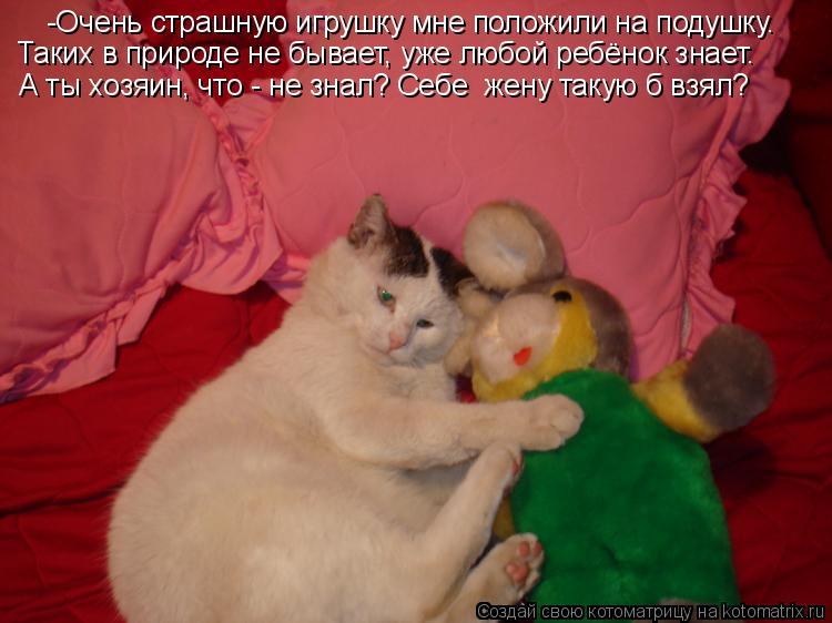 Котоматрица: -Очень страшную игрушку мне положили на подушку. Таких в природе не бывает, уже любой ребёнок знает. А ты хозяин, что - не знал? Себе  жену таку