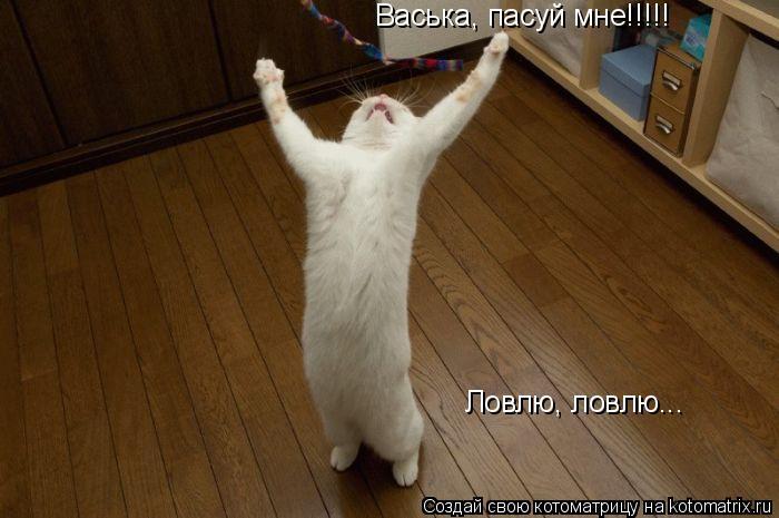Котоматрица: Васька, пасуй мне!!!!! Ловлю, ловлю...