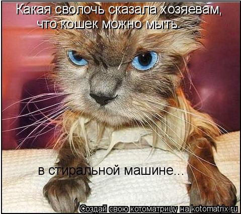 Котоматрица: Какая сволочь сказала хозяевам, что кошек можно мыть  в стиральной машине...