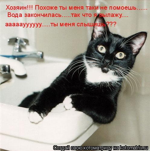 Котоматрица: Хозяин!!! Похоже ты меня таки не помоешь...... Вода закончилась.....так что я вылажу.... ааааауууууу.....ты меня слышишь???